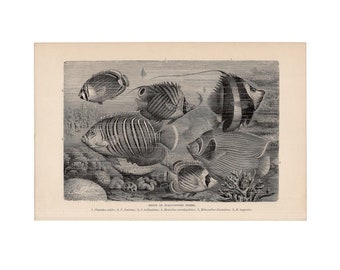 c. 1894 SCALY FINNED FISHES print - fish print - tropical fish lithograph - butterflyfish - Chaetodon - angelfish