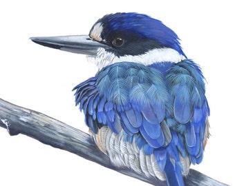 Kingfisher painting PRINT of acrylic painting 5 by 7 print, bird art, wall art, home decor, bird print, australian bird print K6116
