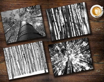 Black and white aspen tree 8x10 inch photograph flat fine art prints modern rustic home decor set of 4 mountain tree nature Colorado forest