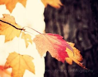 autumn landscape photography orange leaves fall decor yellow decor orange decor brown decor nature photograph