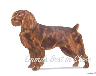 Boykin Spaniel Dog - Archival Fine Art Print - AKC Best in Show Champion - Breed Standard - Sporting Group - Original Art Print