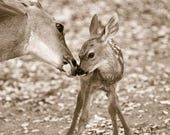 Cute MOM and BABY Deer Se...