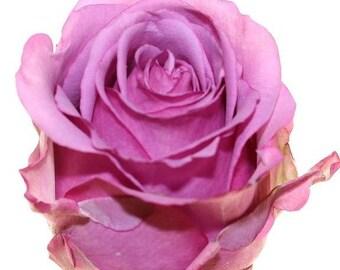 Fresh Cool Water Lavender Bulk Roses  (Free Shipping)