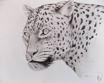 The leopard in pencil.