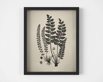 Black and white botanical print, Fern printable, Fern decor, Fern leaf art print, Poster vintage, Fern wall art, Antique clip art, Plant art