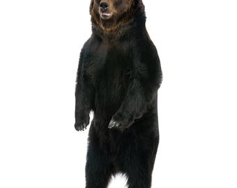 Brown Bear Life-Size Cardboard Cutout