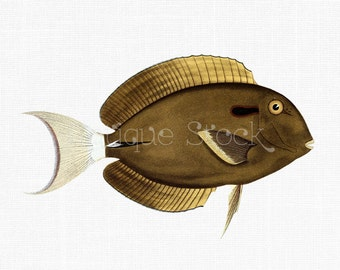 Fish Clip Art 'Black Surgeonfish' Instant Download PNG Image for Invitations, Scrapbook, Wall Art, Collages, Paper Crafts, Cards...
