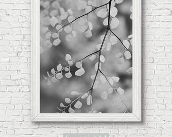 Leaves Photo Print - black and white, wall art, home decor, garden photography, botanical art print, office decor, fine art print, nature