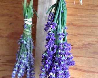 Organic Lavender Seeds English Lavender Seed Lavandula angustifolia Grow Your Own Fresh Lavender