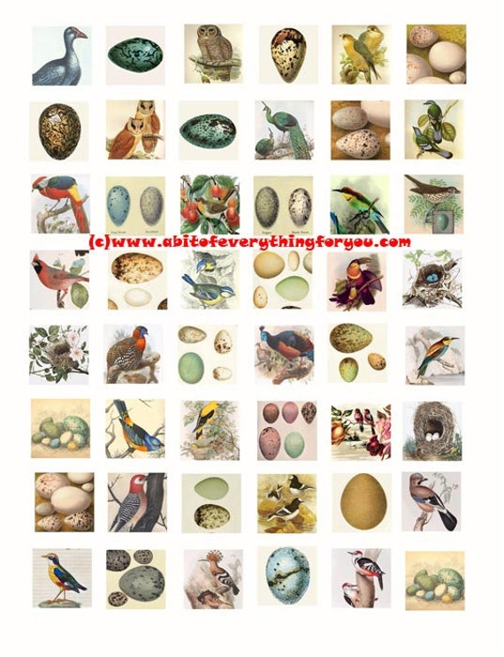 "vintage birds eggs nests animal clip art digital download collage sheet 1"" inch squares graphics images pendant craft printables"