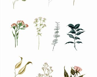 Small Botanicals - PRINT
