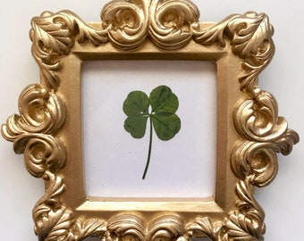 Real Four Leaf Clover in Small Gold Baroque Frame