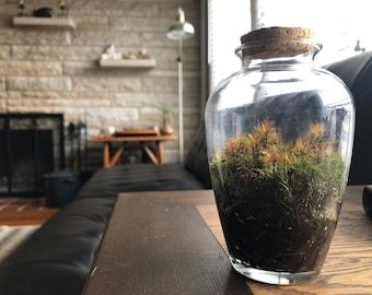 Glass Moss Terrarium - Medium