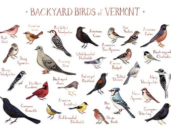 Vermont Backyard Birds Field Guide Art Print / Watercolor Painting / Wall  Art / Nature Print