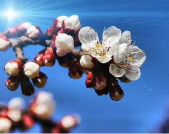 The flower bud under the light