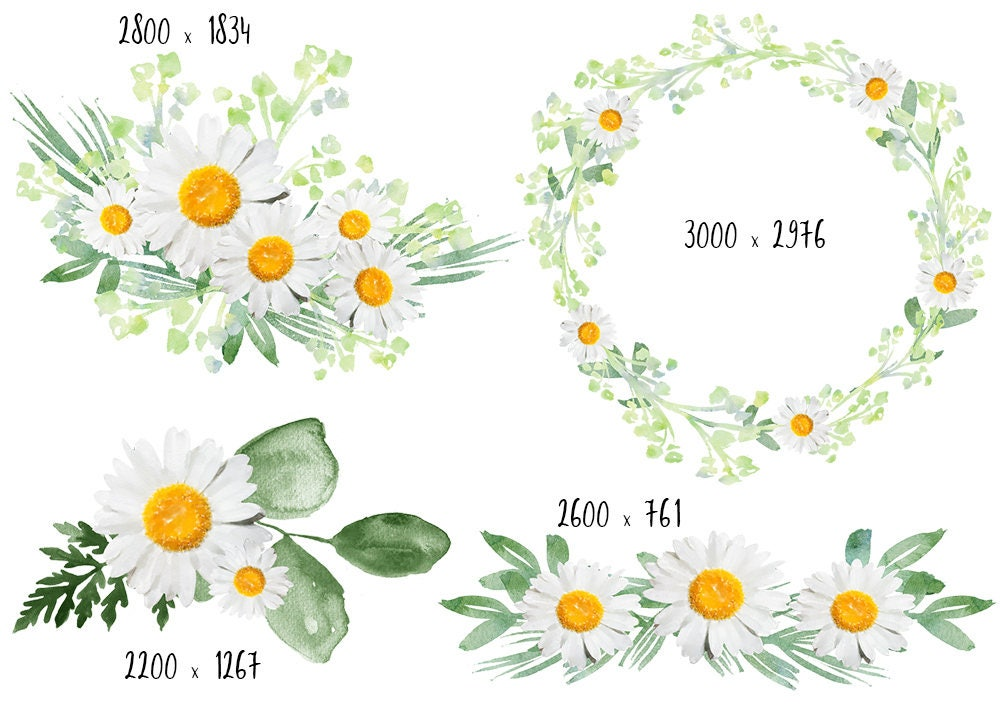 Clipart For Wedding Invitations Free: Daisy Clipart, Digital Flowers, DIY Invites, Watercolor