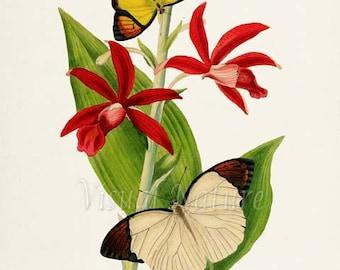 Chinese Butterflies Print, Butterfly Art Print, Butterfly Poster, Floral Art, Garden, yellow butterfly, white butterfly, red flower