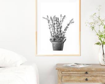 Botanical Lavender Print - Botanical Wall Art Print - Botanical Wall Art - Black and White - Fine Art Photography - Neutral Wall Decor