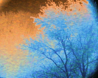 Trees 16x20 Classy Copper Wall Art Photography Nature with Blue and Bronze, Home Decor