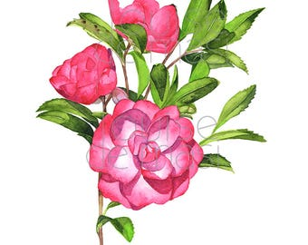 Camellia print of watercolor painting. C21317, 5 by 7 size, Camellia watercolor, Camellia painting, flower watercolor, floral print