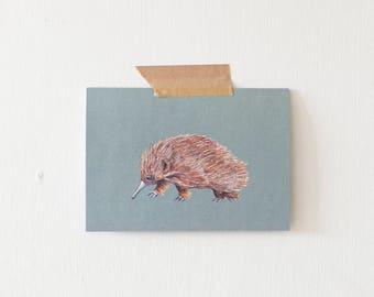 Echidna Australian Animal Illustrated Blank Greeting Card
