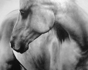 PRINT: Limited Edition Horse Print