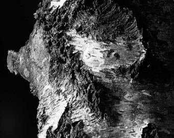 Bark of the Tree II