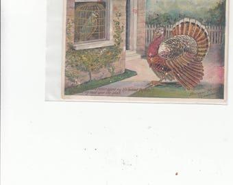 Thanksgiving  Lounsbury Antique Postcard Parrrrot Prefers  Bars To Losing His Head Like Turkey C 1910/Unused