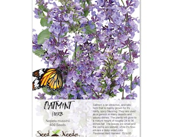 Catmint Herb Seeds (Nepeta mussinii) Non-GMO Seeds by Seed Needs