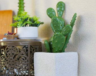 Barbary Fig Cactus in Beige Stone Planter