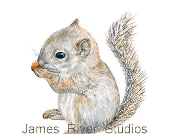 Squirrel Art Squirrel Painting Squirrel Print. Squirrel Watercolor Painting Squirrel Nursery Art Baby Squirrel Woodland Animal Forest Animal
