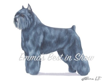 Bouvier des Flandres Flanders Dog - Archival Fine Art Print - AKC Best in Show Champion - Breed Standard - Herding Group - Original Print