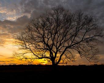 Alabama Photography - Field Sunset - Landscape Photo - Southern USA Photography - Sunset Landscape - Fairhope Alabama - Metal Print
