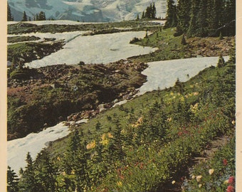 USA, Upper Paradise Valley, Mt Rainer National Park ~ Vintage Postcard ~ Posted 1970s