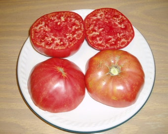Tomato Plant, German Johnson Heirloom Organic