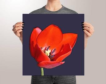 Red Tulip Art Print on Paper