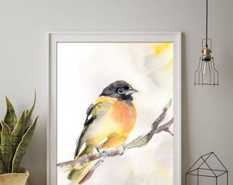 Baltimore Oriole Bird Fine Art Print, bird watercolor painting, watercolor print, bird art, wall art print of bird