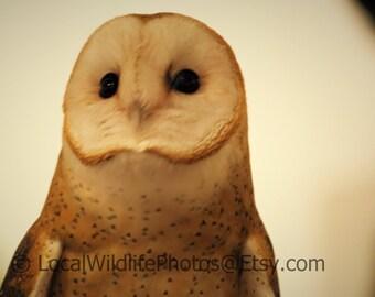 Barn Owl-Digital Download