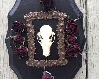 Bat skull plaque taxidermy gothic decor wall art