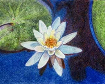 Watercolour Waterlily