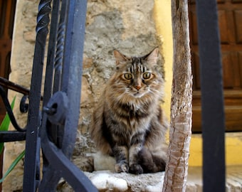 FRANCE PHOTOGRAPHY - cat in Nice