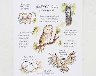 Woodland nursery, forest art, Woodland Guide Barred Owl, giclée print, Kit Chase artwork, 5x7, 8x10, 11x14
