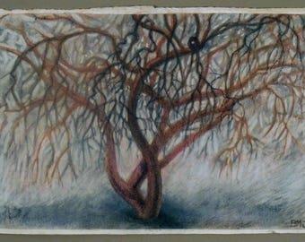 Wintered Crabapple Tree.