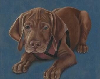 Pet Portrait Dog in Pastels, Dog Art Custom Dog Portrait, Vizsla Art,  Pet Dog Portrait, Dog Drawing Custom Pastel Art, Custom Pet Portrait