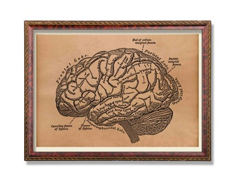 Antique brain print Anatomy decor Anatomical art