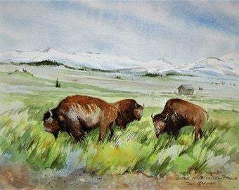 Original Watercolor Painting, Bison Near Yellowstone National Park, USA