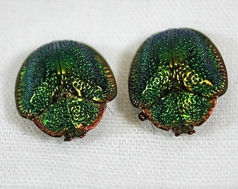 Pair of Antique Victorian Green Scarab Beetles - Edged in gold/copper
