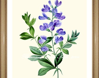 "Sweet Pea Print. #3 Botanical Print. Blue Flower Print. Botanical Wall Art. 5x7"" 8x10"" 11x14"" 13x19"""