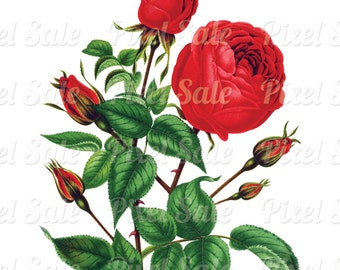 ROSE instant download, wedding clipart, digital flowers, pink red JPG digital download no.025