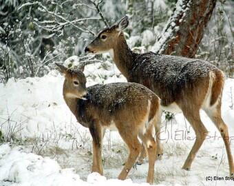NOTE CARD, snow, deer, trees, doe, fawn, Ellen Strope, Castteam, winter, forest, whitetail deer, deer decor, cabin decor